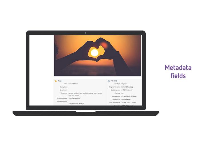 Metadata fields