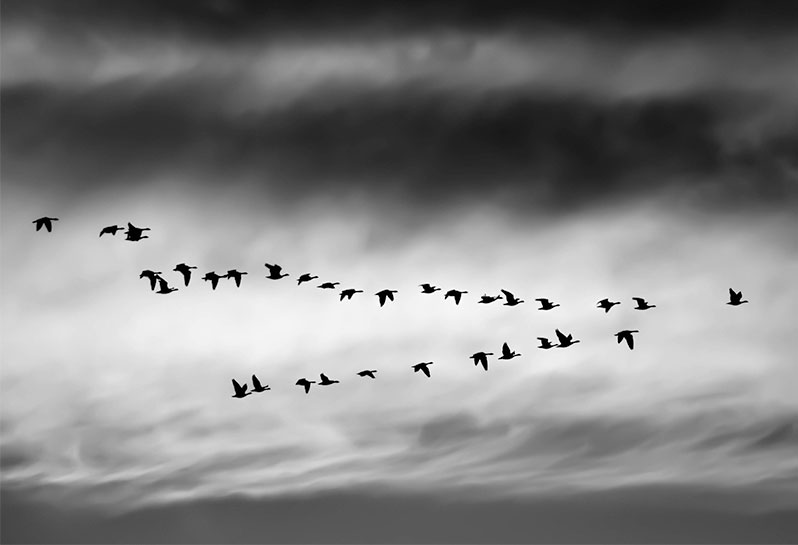 Migration-Process